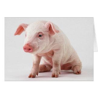 Cartes Petit porc