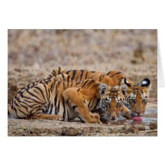 Cartes Petits animaux de tigre royaux de Bengale au point