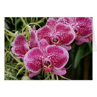 Cartes Phalaenopsis
