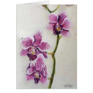 """Cartes Phalaenopsis """"orchidée de mite"""" 5"""" x 7"""", avec"""