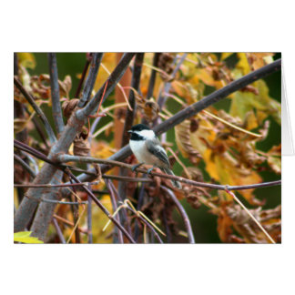Cartes Photo de Chickadee Noir-Couvert mignon