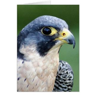 Cartes Photo de visage de faucon pérégrin