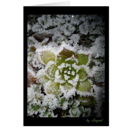 Cartes photo noire nature automne hiver neige givre