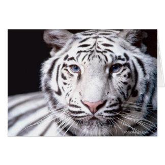 Cartes Photographie blanche de tigre de Bengale