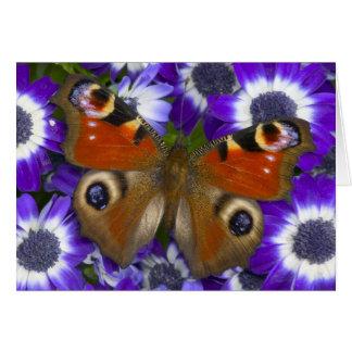Cartes Photographie de Sammamish Washington du papillon