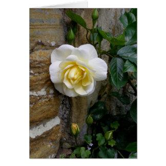 Cartes Photographie rose de l'anglais blanc