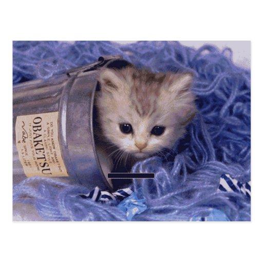 Cartes photos précieux de chat et de chaton, cadea carte postale