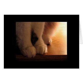 Cartes Pieds de chat