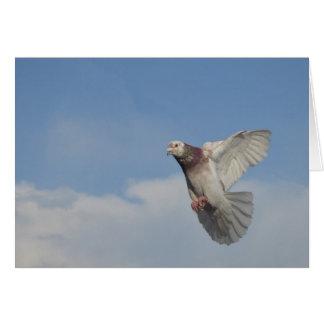 Cartes Pigeon voyageur en vol