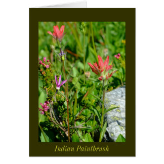 Cartes Pinceau indien