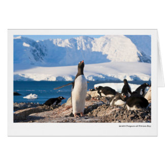 Cartes Pingouin de Gentoo à la baie dorienne