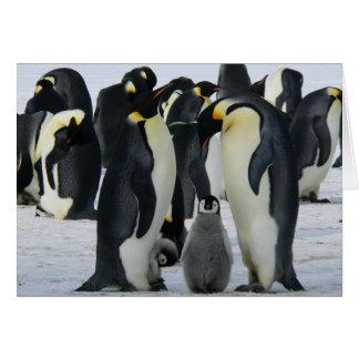 Cartes Pingouins