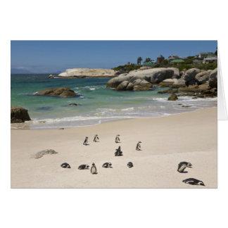 Cartes Pingouins à la plage de rochers, ville de Simons,