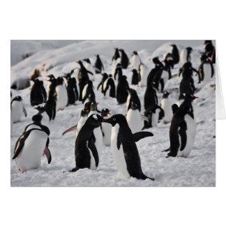 Cartes Pingouins au jeu