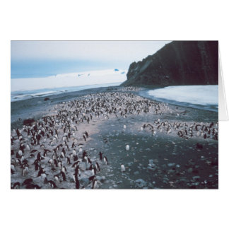 Cartes Pingouins d'Adelie