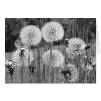 Cartes Pissenlits en noir et blanc