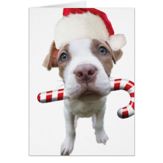 Cartes Pitbull de Noël - pitbull de père Noël - chien de