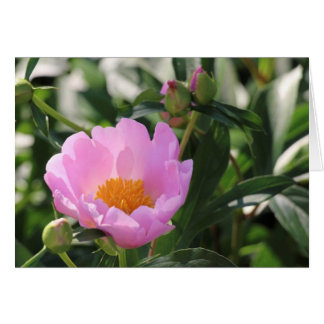 Cartes Pivoine et bourgeons roses