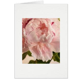 Cartes Pivoine rose (Paeonia)