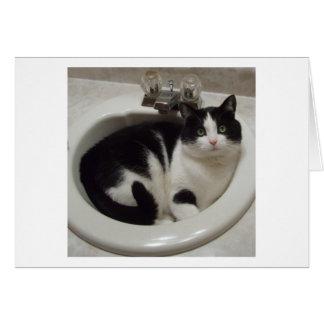 Cartes Plaisir d'amoureux de les chats