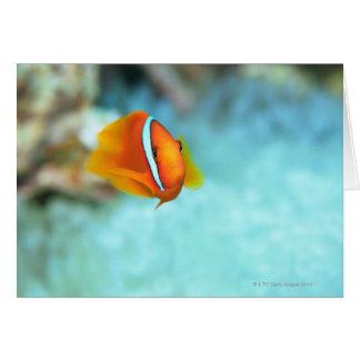 Cartes Plan rapproché des poissons d'anémone de tomate,