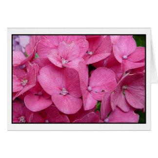 Cartes Plan rapproché rose d'hortensia