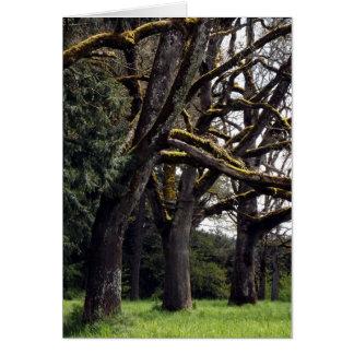 Cartes Plantation de chêne