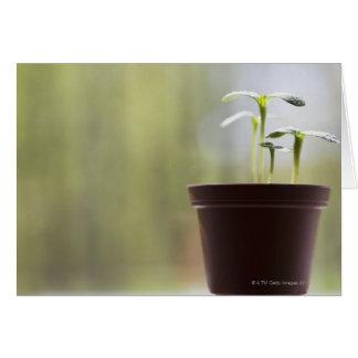 Cartes Plantes de tournesol poussant dans le pot