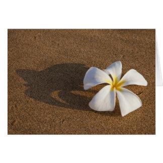 Cartes Plumeria sur la plage sablonneuse, Maui, Hawaï,