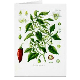 Cartes Poivron annuum (poivre de Cayenne)