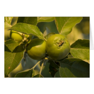 Cartes pommes vertes