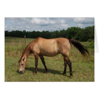 Cartes Poney brun grisâtre de Connemara, cheval, frôlant