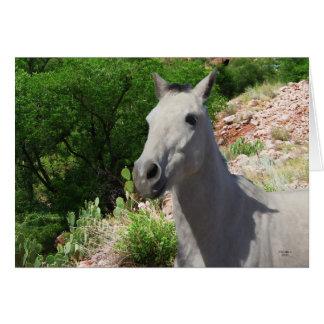 Cartes Poney gris gris assez petit avec de grands yeux -