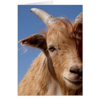 Cartes Portrait de chèvre de cachemire