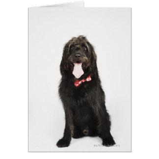 Cartes Portrait de chien de Labradoodle