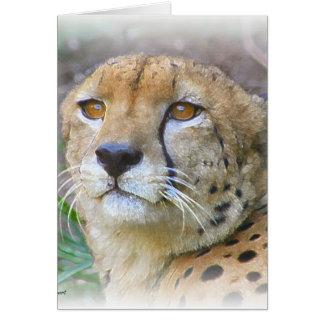 Cartes Portrait de guépard