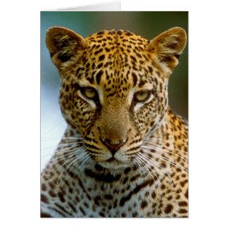 Cartes Portrait de léopard
