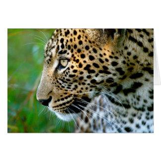 Cartes Portrait de léopard (Panthera Pardus)