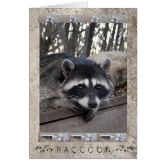 Cartes Portrait de raton laveur