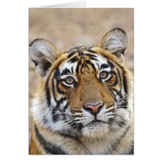 Cartes Portrait de tigre de Bengale royal, Ranthambhor