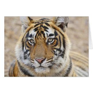 Cartes Portrait de tigre de Bengale royal, Ranthambhor 6