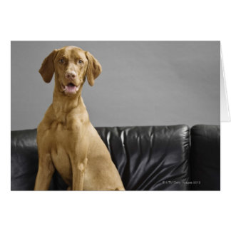 Cartes Portrait d'un chien