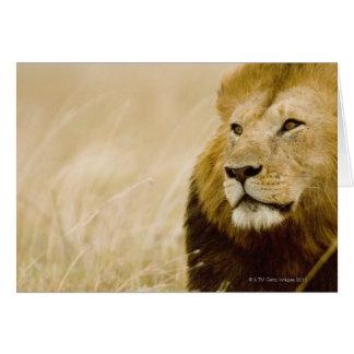Cartes Portrait masculin de lion (Panthera Lion), masai