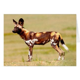 Cartes Position africaine de chien sauvage (Lycaon