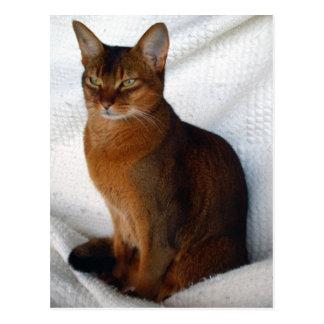Cartes postales abyssiniennes vermeilles de chat