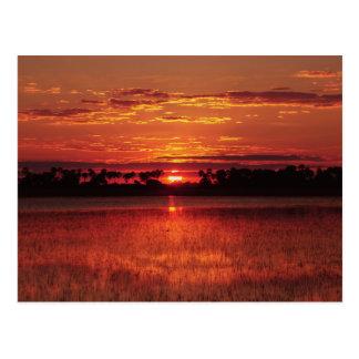 Cartes postales africaines du Botswana de coucher