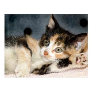 Cartes postales de chaton d'abri de calicot de