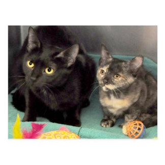 Cartes postales de chaton d'écaille/chat noir