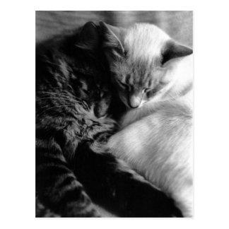 Cartes postales de chats de sommeil