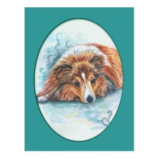 Cartes postales de chien de berger de Shetland